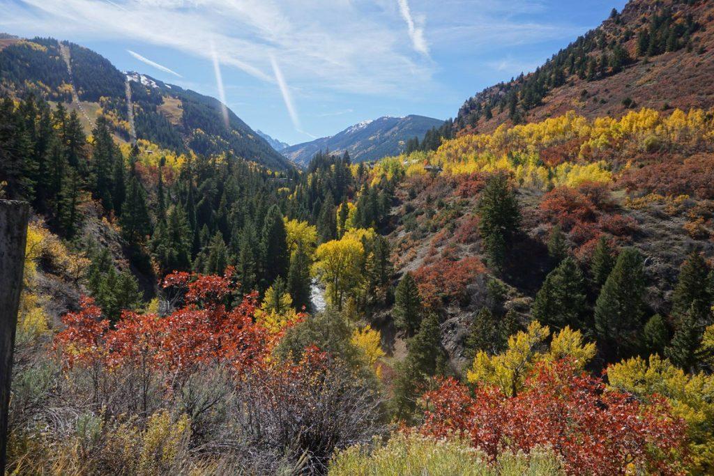Fall colors at Aspen, Colorado