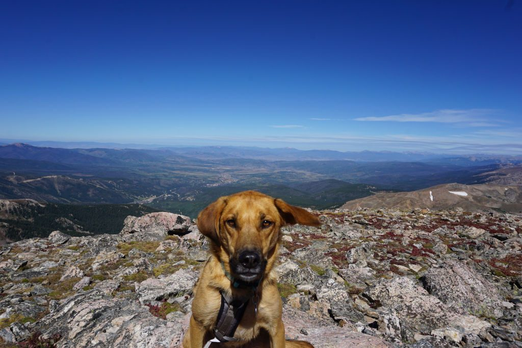 View of dog on top of James Peak