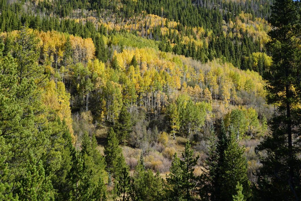 View of fall colors at Jim's Creek near Winter Park, Colorado