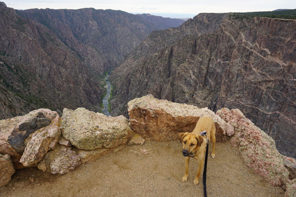 View of the Black Canyon of the Gunnison National Park which is dog friendly.